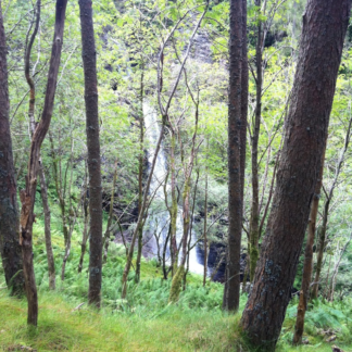 Ben Ledi Forest Walk