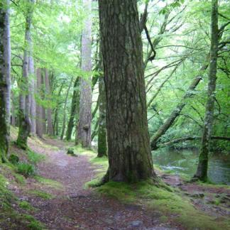 Loch Lomond Forest 1