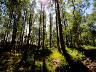 Loch Lomond Forest 2