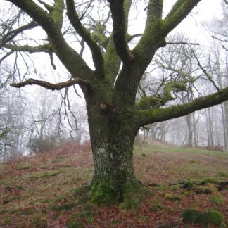 Loch Lomond Forest