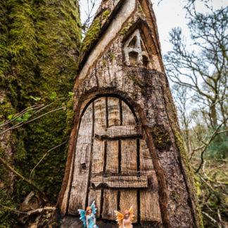 Doon Hill Fairy Tree