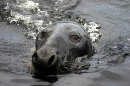 Seal Colony_Loch Goil