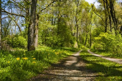 weekend nature walk with RSPB