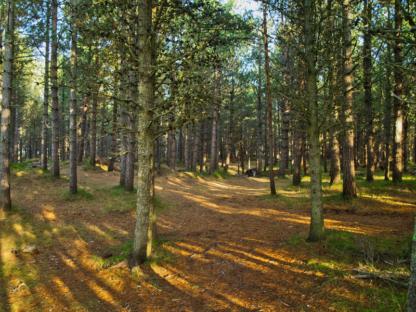 Braeval Forest Walk