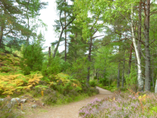 Crianlarich Forest Walk