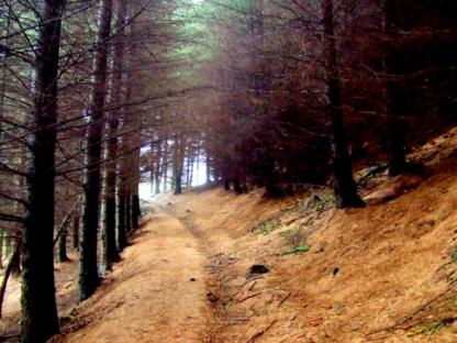 Cruach Tairbeirt Forest Walk