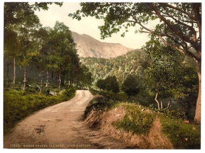 Loch Katrine Forest Walk