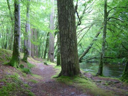 Lochgoilhead Forest Walk