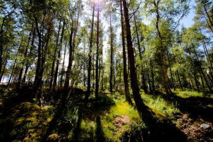 Old Drymen Road Forest Walk