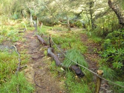 Tyndrum Forest Walk